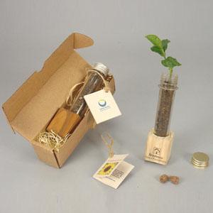 Brindes da Terra - Kit ecológico com tubo de ensaio, terra em suporte de madeira reflorestada e bulbo de lírio dos ventos com tag explicativa.