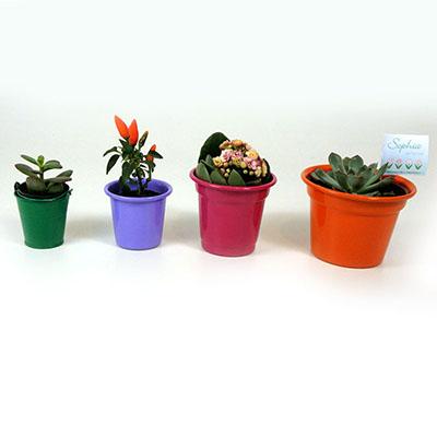 Brindes da Terra - Linha Meu Jardim,mini vasos de Alumínio pintado ( cores diversas) com mudas de suculentas variadas.