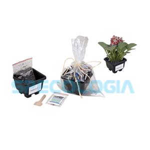 sp-ecologia - Kit para cultivo com celofane.