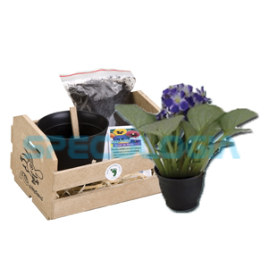 sp-ecologia - Kit para cultivo com cestinha.