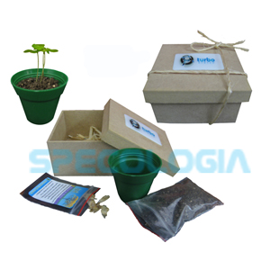 Kit para cultivo com caixa em MDF - SP Ecologia