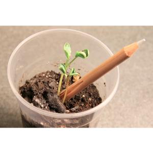 Lápis semente, produto 100% artesanal e sustentável - SP Ecologia