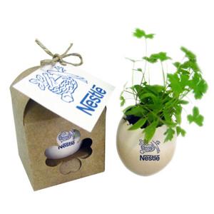 Ovo mágico com semente de flores e gravação personalizável. - SP Ecologia