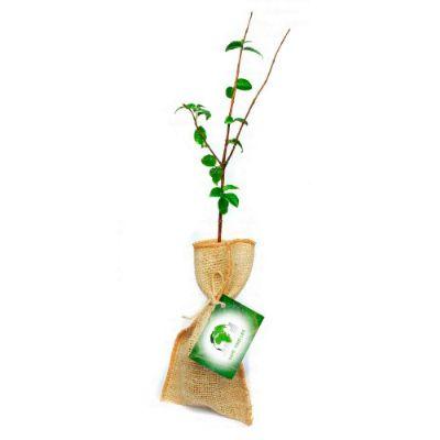 Ecobrindes - Baby tree juta