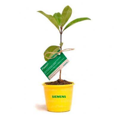 ecobrindes - Baby tree cachepo