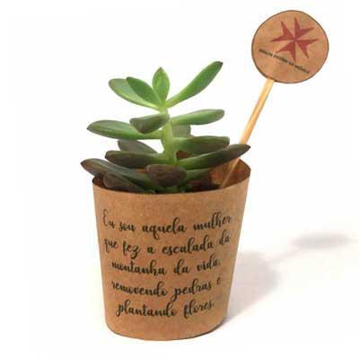 Mini suculenta personalizada. - Kits & Requintes