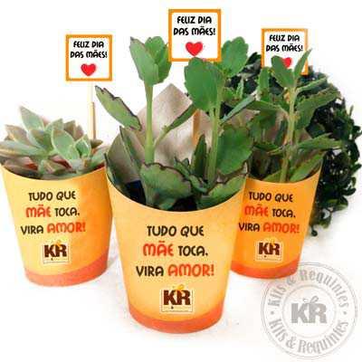 Mini Suculenta Personalizada - Kits & Requintes