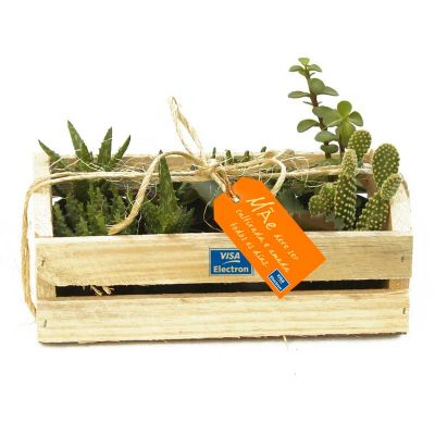 Plantinhas suculentas - Kit no caixote - Make Brazil