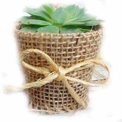 Make Brazil - Planta com embalagem personalizada.