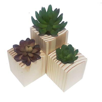 studio-blomma - Vasinho de madeira para arranjo delicado de suculentas e cactus. A planta não acompanha o produto.  12 x 7 x 7 cm – Tamanho Grande 8 x 7 x 7 cm – Tama...