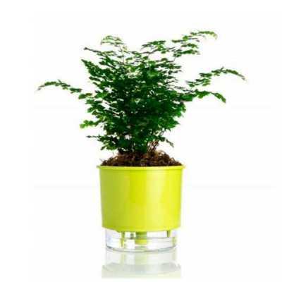 mr-cooler - Vaso para Plantas Autoirrigável Personalizado