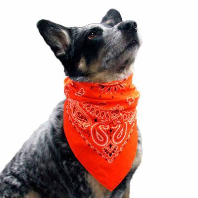 Lenço para Pet Personalizado do seu jeito, gravação com qualidade digital. - Thap  Brindes