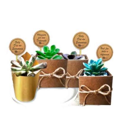 Contém: 1 Vaso de Mini Suculenta 1 Caixinha de Papel Kraft ou embalagem papel dourado 1 Tag impre...