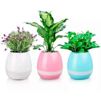 Vaso de planta musica